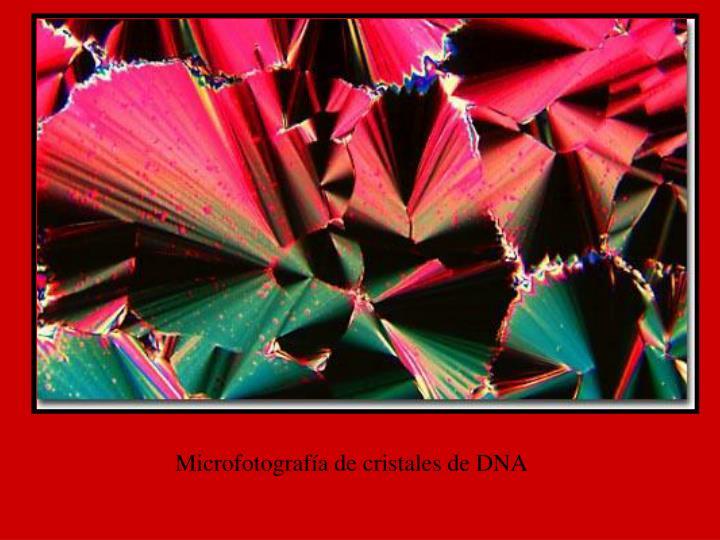 Microfotografía de cristales de DNA