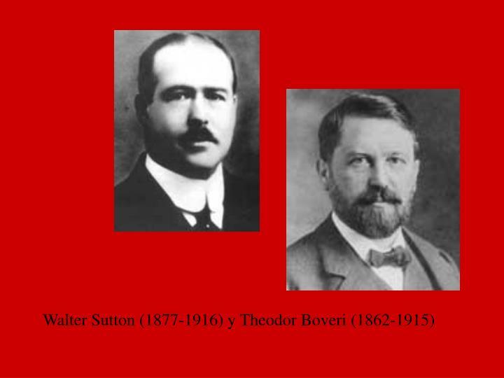 Walter Sutton (1877-1916) y Theodor Boveri (1862-1915)