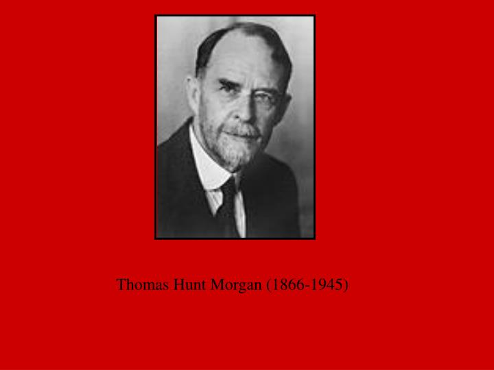 Thomas Hunt Morgan (1866-1945)