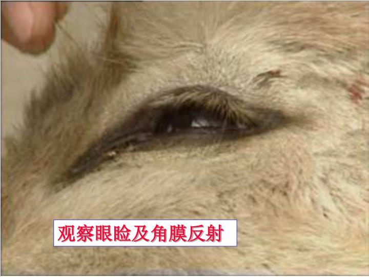 观察眼睑及角膜反射