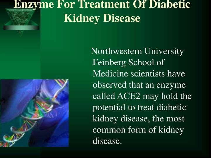Northwestern University Feinberg School of Medicine scientists have observed that an enzyme called ACE2 may hold the potential to treat diabetic kidney disease, the most common form of kidney disease.