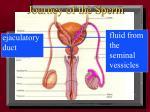 journey of the sperm5