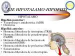 eje hipotalamo hipofisis
