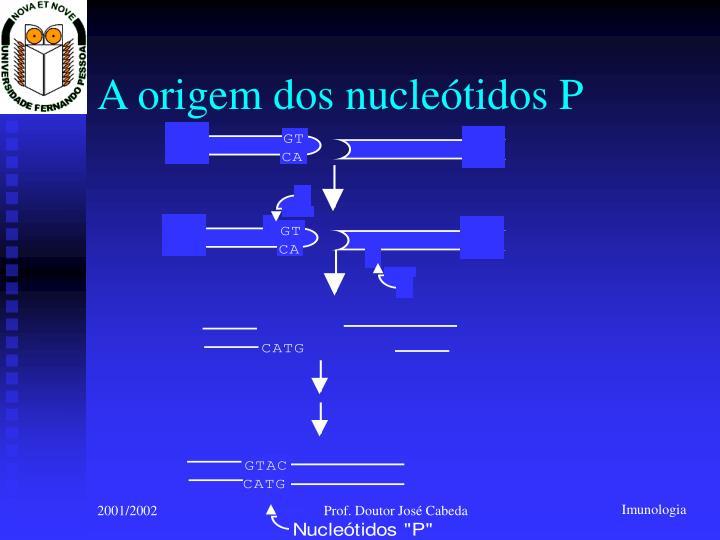 A origem dos nucleótidos P