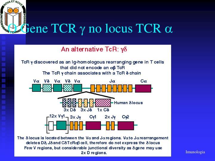 O Gene TCR