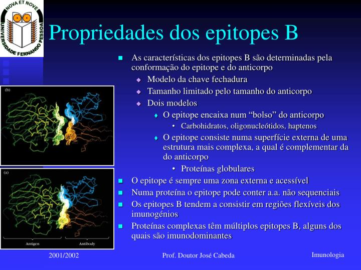 Propriedades dos epitopes B
