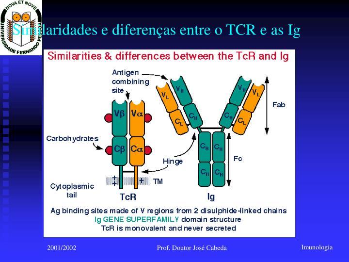 Similaridades e diferenças entre o TCR e as Ig