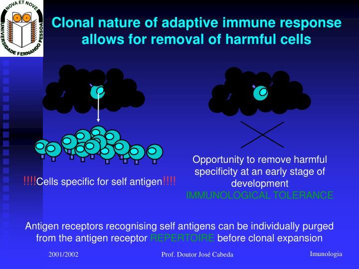 Clonal nature of adaptive immune response
