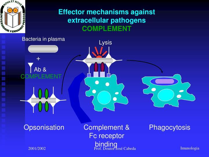 Bacteria in plasma