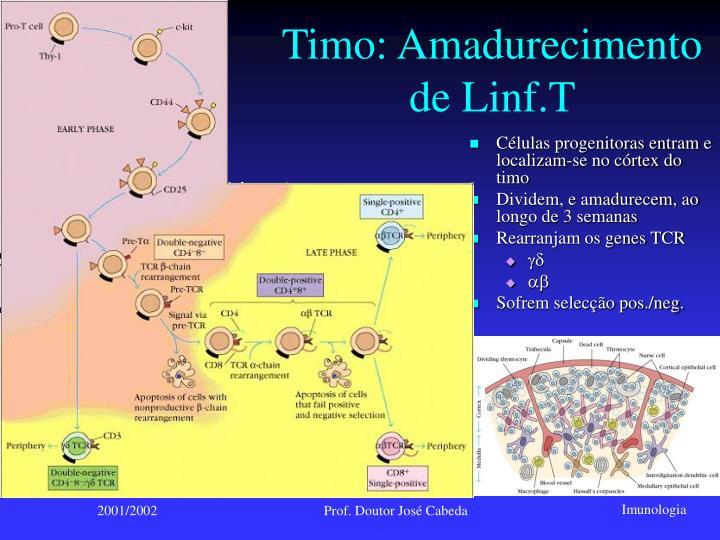 Timo: Amadurecimento de Linf.T