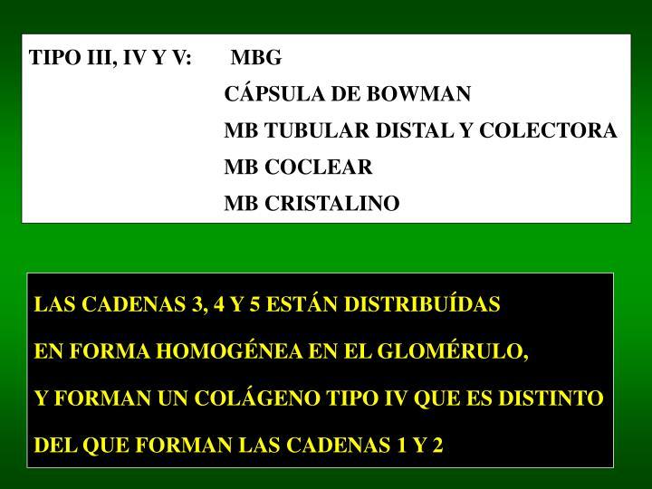 TIPO III, IV Y V:       MBG