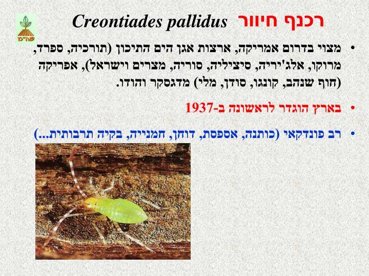 Creontiades pallidus