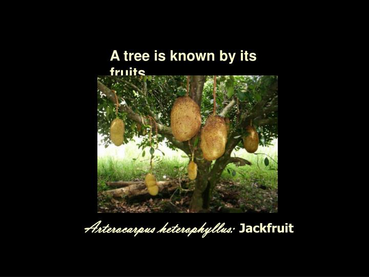 A tree is known by its fruits.