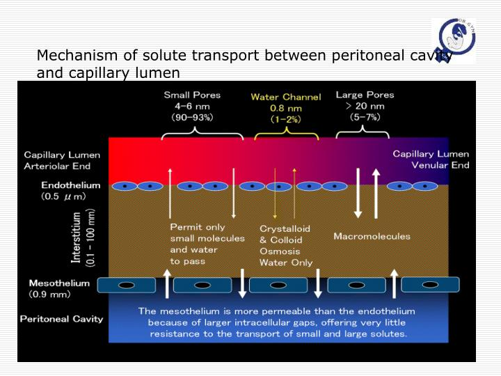 Mechanism of solute transport between peritoneal cavity and capillary lumen