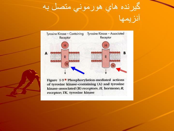 گيرنده هاي هورموني متصل به آنزيمها