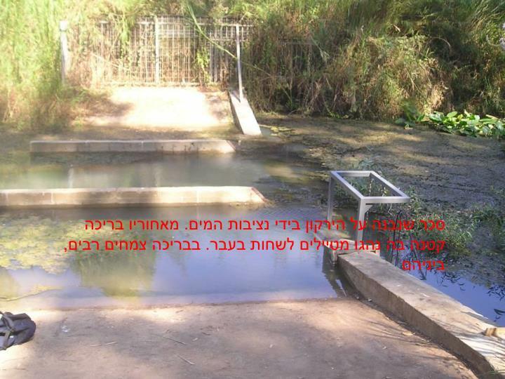 סכר שנבנה על הירקון בידי נציבות המים. מאחוריו בריכה קטנה בה נהגו מטיילים לשחות בעבר. בבריכה צמחים רבים, ביניהם