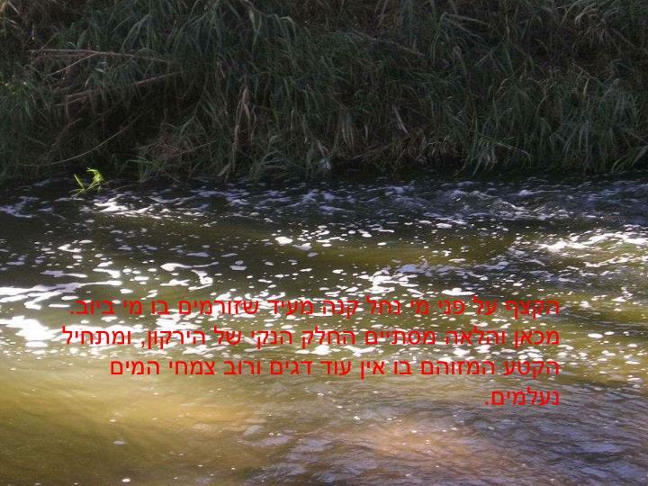 הקצף על פני מי נחל קנה מעיד שזורמים בו מי ביוב. מכאן והלאה מסתיים החלק הנקי של הירקון, ומתחיל הקטע המזוהם בו אין עוד דגים ורוב צמחי המים נעלמים.