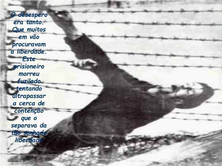 O desespero era tanto. Que muitos em vão procuravam a liberdade. Este prisioneiro morreu fuzilado tentando ultrapassar a cerca de contenção que o separava da tão sonhada liberdade