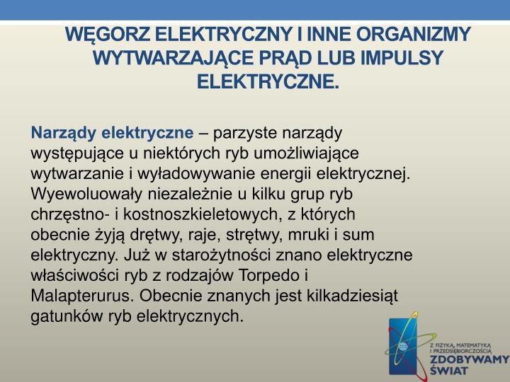 Węgorz elektryczny i inne organizmy wytwarzające prąd lub impulsy elektryczne.