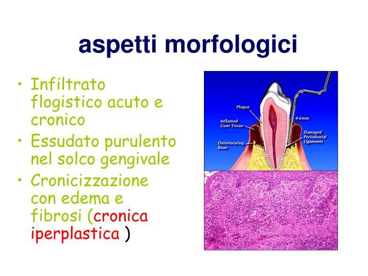 aspetti morfologici