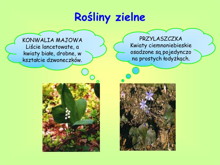 Rośliny zielne