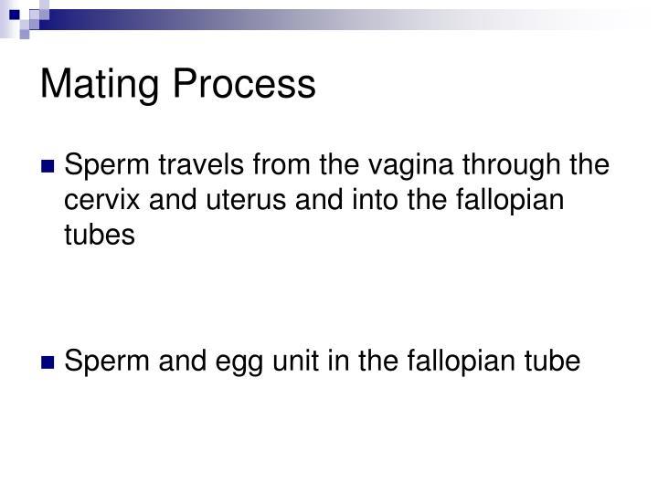 Mating Process