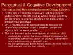 perceptual cognitive development