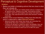 perceptual cognitive development13