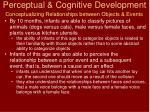 perceptual cognitive development3
