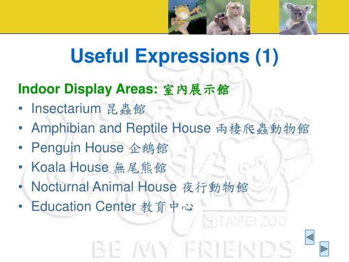 Useful Expressions (1)