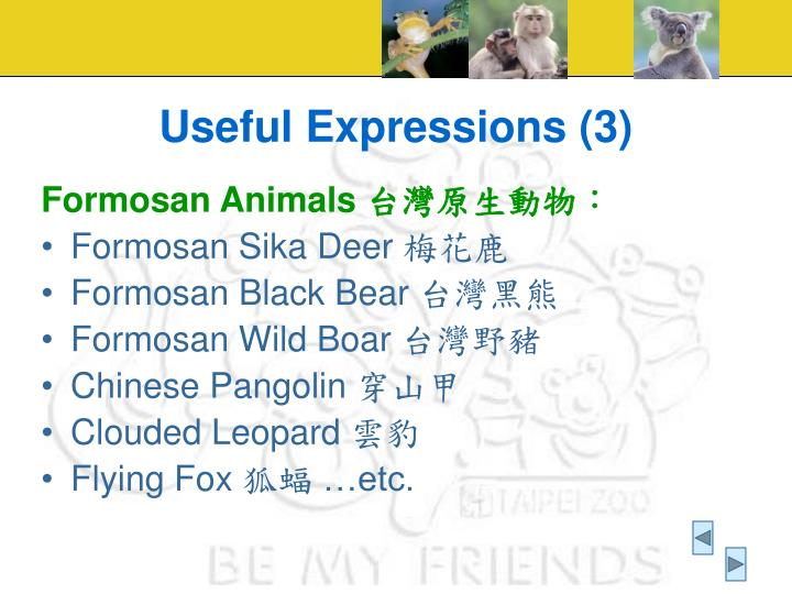 Useful Expressions (3)