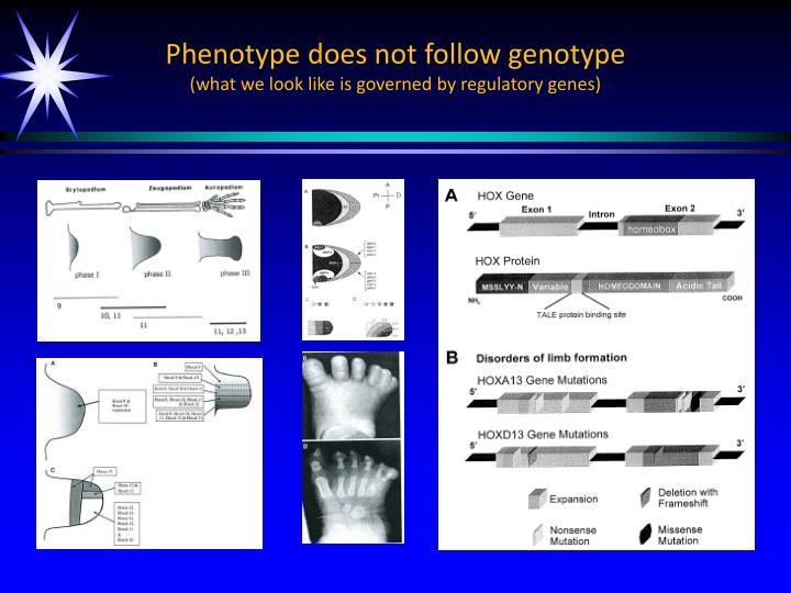 Phenotype does not follow genotype