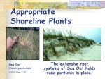 appropriate shoreline plants
