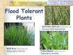 flood tolerant plants