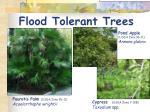flood tolerant trees