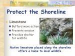protect the shoreline1