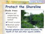 protect the shoreline2