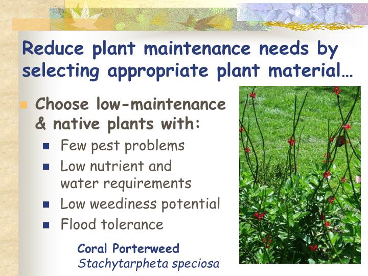 Reduce plant maintenance needs by selecting appropriate plant material…
