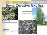 some invasive exotics