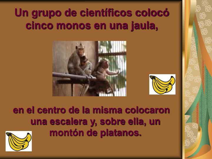 Un grupo de científicos colocó cinco monos en una jaula,