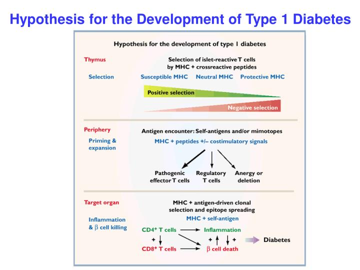 Hypothesis for the Development of Type 1 Diabetes