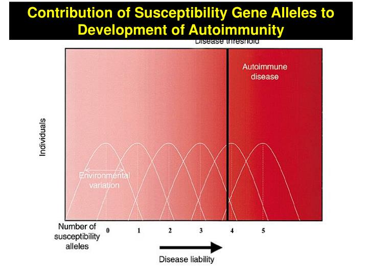 Contribution of Susceptibility Gene Alleles to Development of Autoimmunity