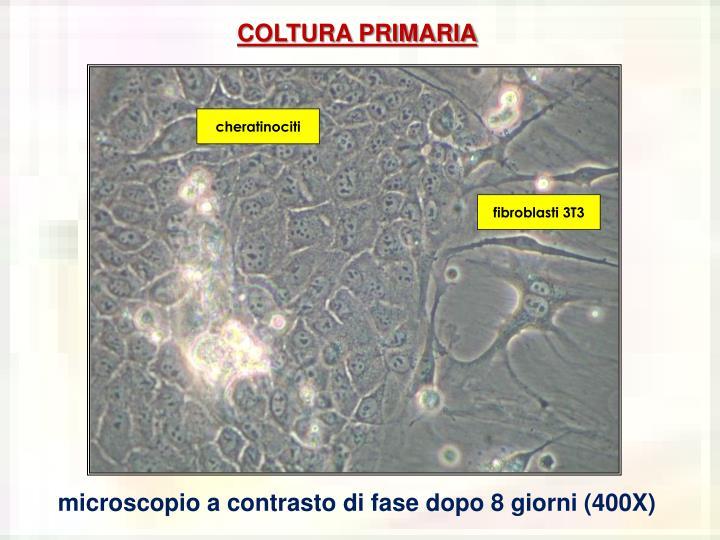 COLTURA PRIMARIA
