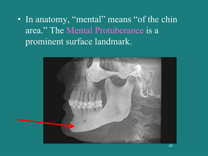 "In anatomy, ""mental"" means ""of the chin area."" The"