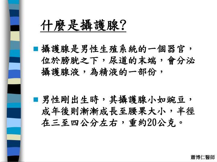 什麼是攝護腺