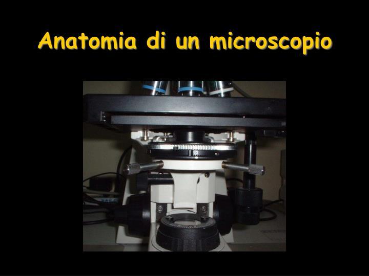 Anatomia di un microscopio