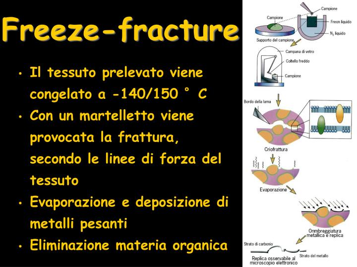 Freeze-fracture