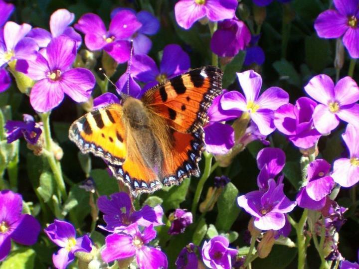 Seja flexível como as flores, como as borboletas... experimente todos os perfumes. Estenda a mão, ofereça a sua compreensão, o seu amor. Viemos a este planeta para aprender a amar.
