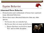 equine behavior14