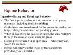 equine behavior3